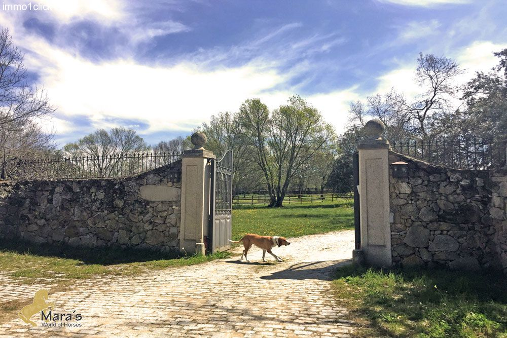 horseproperty for sale in Avila, Valle Tietar