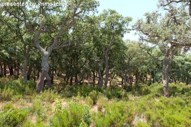 Hunting Estate, Spain, Andalusia for sale
